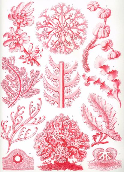Artistic display of red algae