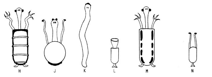 didaktozoa