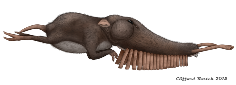 pipeorgan_tasselsnouter__rhinochilopus_musicus__by_clawedfrog-d9f6oe4