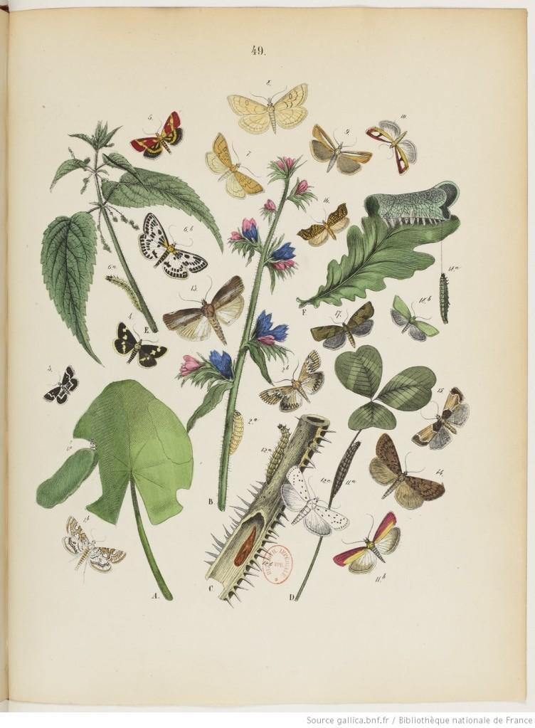 Monde Papillons 1