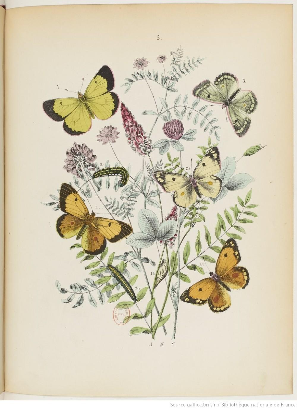 Monde Papillons 2