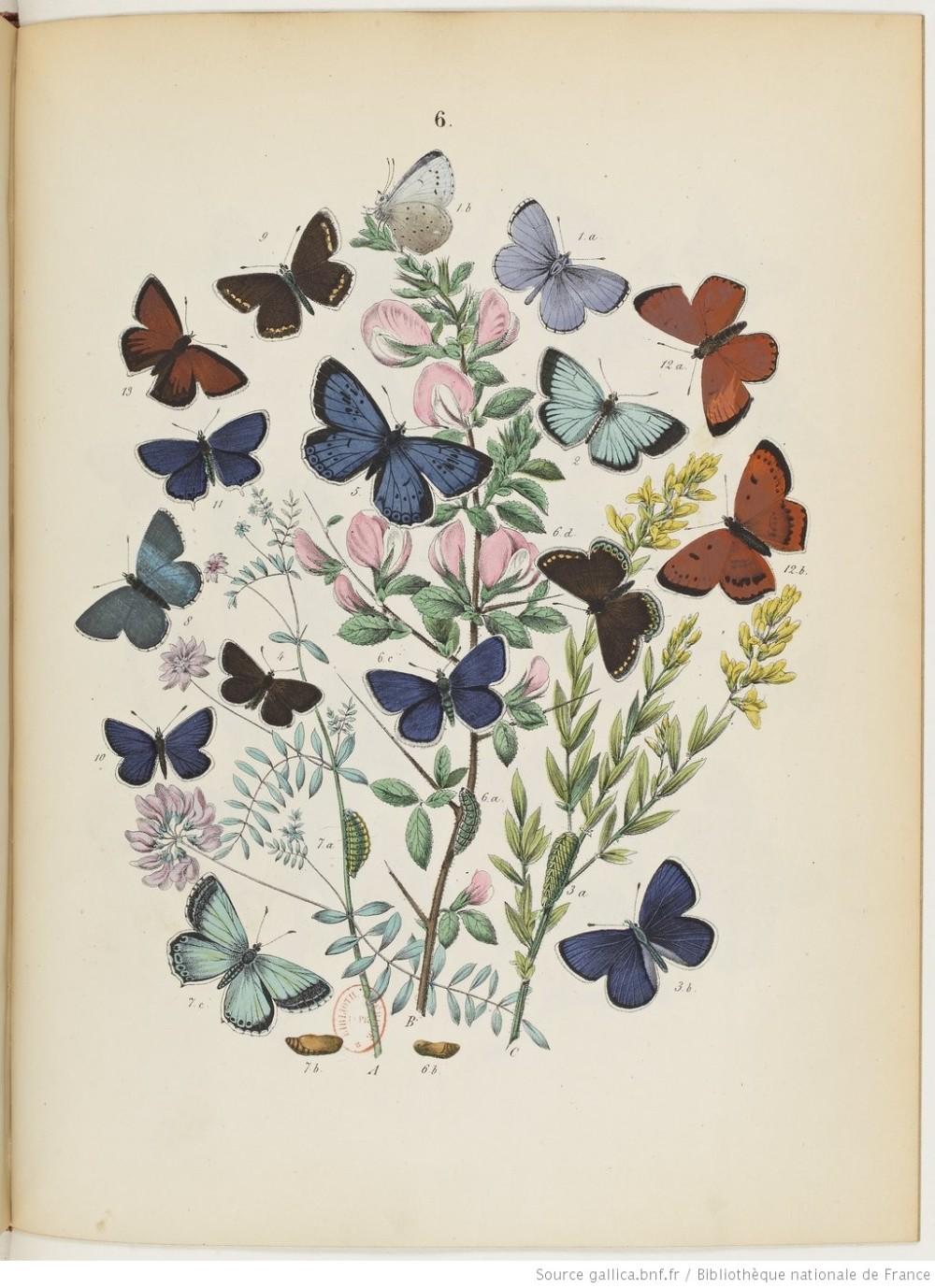 Monde papillons portada